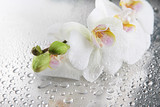 white beautiful orchids with drops - 47983081