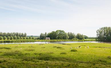 Picturesque Dutch summer landscape