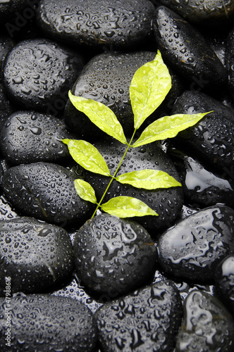 green plant on wet pebble in water drops