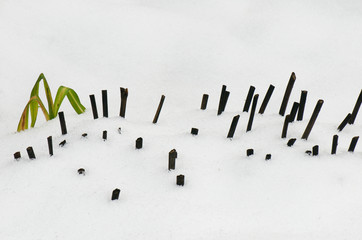 green plant and brown stumps covered with snow