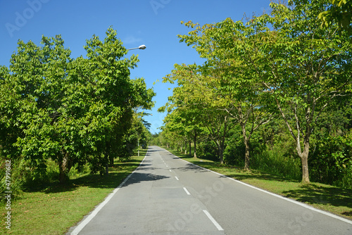Tree Lined Road In The Countryside