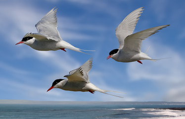 Terns head out to Sea