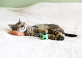 Small Kitty With Red Pillow And Soccer Ball - 47995610