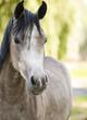 Fototapeten,pferd,tier,wiese,natur