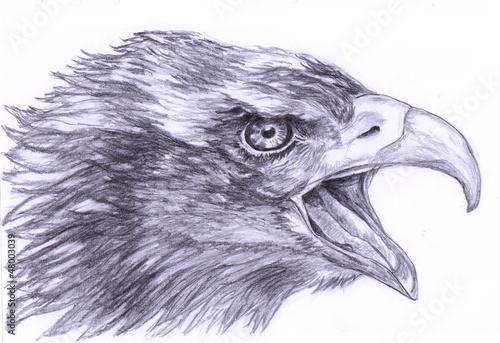 illustration Sketch the Eagle Head - 48003039