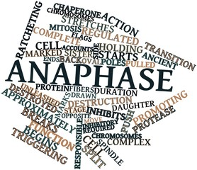 Word cloud for Anaphase
