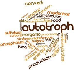 Word cloud for Autotroph