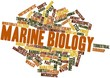 Word cloud for Marine biology