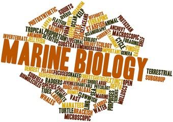 Word cloud for Marine biology