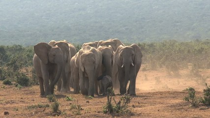 Elephants towards camera with in the middle a baby elephant