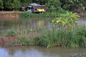Village et Palmiers sur l'île de Khone