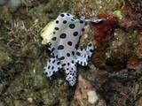 Fototapete Indonesia - Sand - Fische