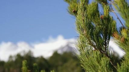 Pine Cone of Etna Volcano