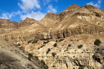 landscape in the Judean Hills
