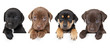 Leinwanddruck Bild - Four puppies above banner