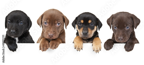 Four puppies above banner