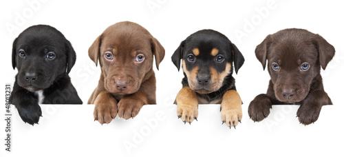 Leinwanddruck Bild Four puppies above banner