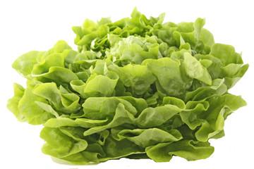 Gros plan sur la salade