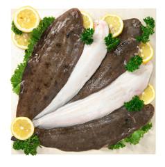 Sogliole - Fish, sole