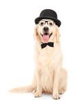 Labrador retriever with bow-tie wearing retro hat
