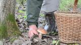 wicker basket man hand pick uo gather red cap mushroom poster