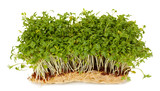 Fresh cress salad on green background