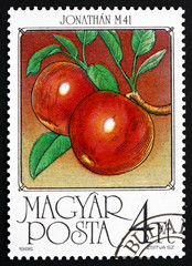 Postage stamp Hungary 1986 Apples, Malus Domestica