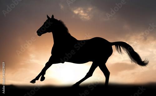 stallion runs