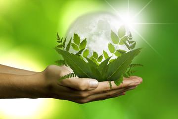 concepto de ecología