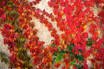 Beautiful red leaves on concrete background