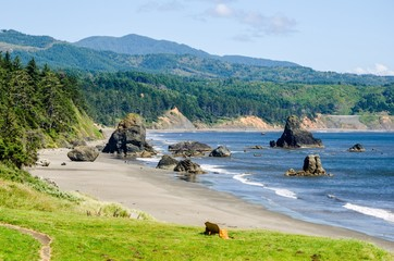 The Beautiful Oregon Coast