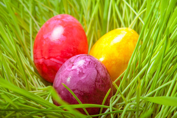 Coloured Easter eggs nestling in grass