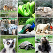 Beautiful animals collage with nine photos