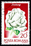 Postage stamp Romania 1970 Iceberg Rose, Rose Cultivar poster
