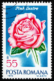 Postage stamp Romania 1970 Pink Luster, Rose Cultivar poster