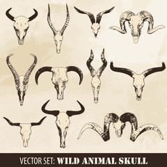 Wild Animal Skull Set