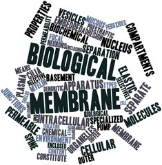 Word cloud for Biological membrane