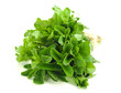 Erba aromatica - Aromatic herbs
