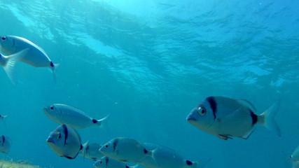 Fish near surface