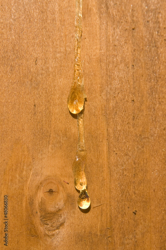 Drops of resin on timber wood