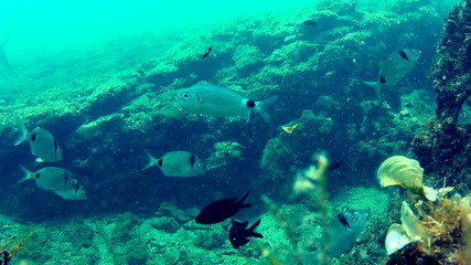 Fish on seabed