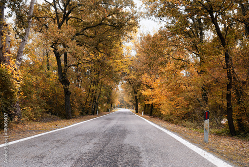 road with trees with yellow leaves