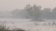 Flamingo wading in estuary in morning fog