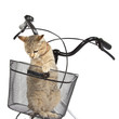 cat sitting in bicycle basket