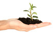 woman's hand holding a plant growing out of the ground,