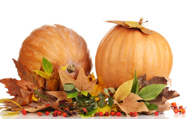 Two ripe orange pumpkins with yellow autumn leaves isolated