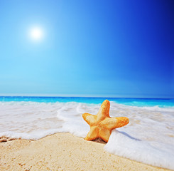 A view of a starfish on a beach with clear sky and wave
