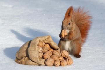 happiness squirrel