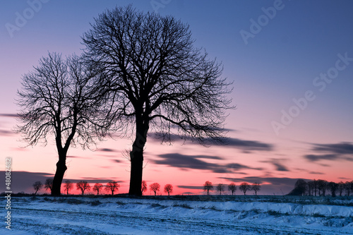 after sunset trees at winter