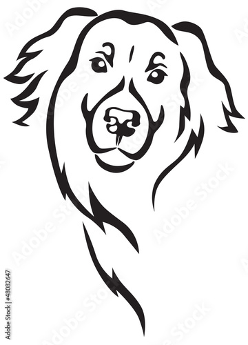 Newfoundland dog head
